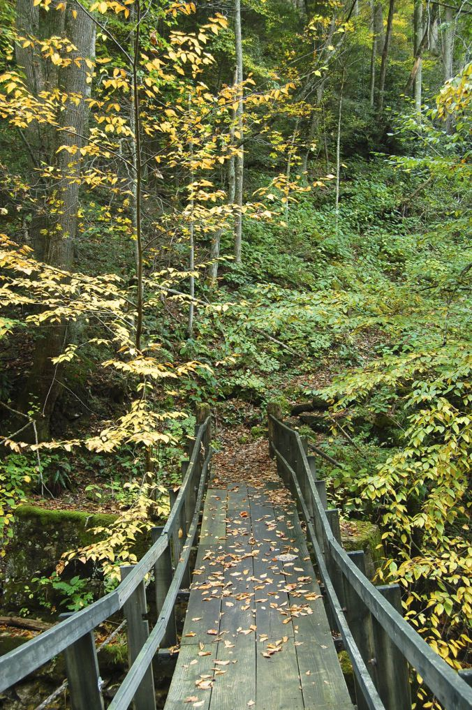 Swinging Bridge at Babcock State Park, West Virginia, autumn on andreabadgley.com